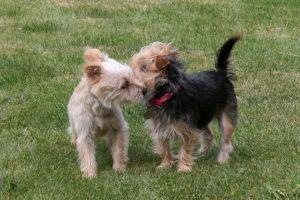 Alergie na zvířata - Můžete si nechat svého domácího mazlíčka?